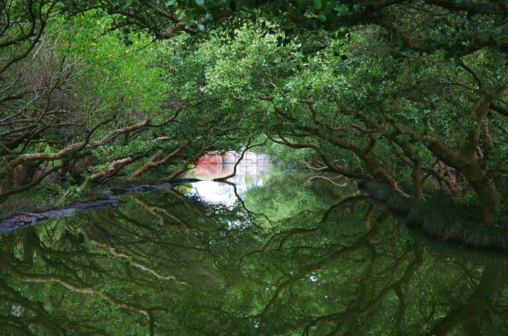 台江綠色隧道一張流~天使之吻