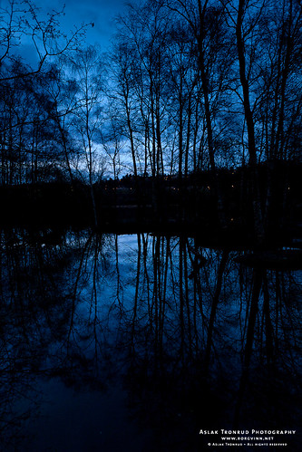 Reflecting trees at dusk by aslakt