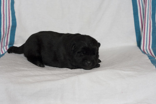Kumi-Fall2011-Day12-Puppy3-Female-b
