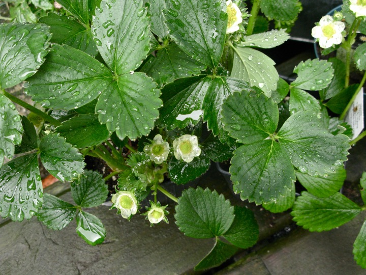 spring garden 009