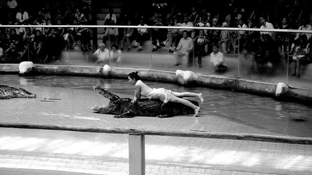 gator3