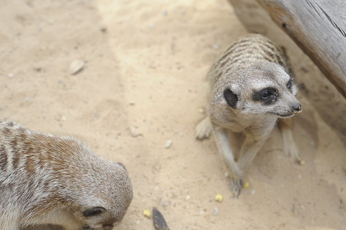 Halls Gap Zoo,