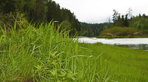 nature spring latvia