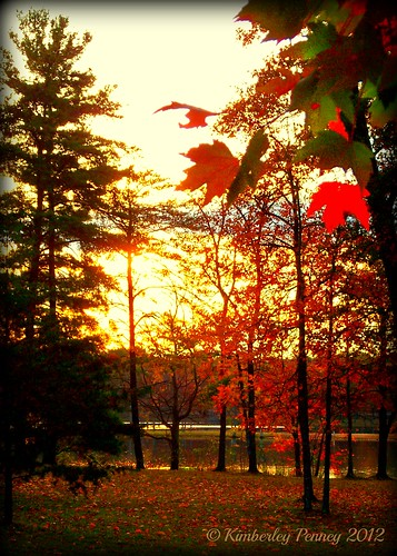 autumn trees red lake fall water colors sunrise