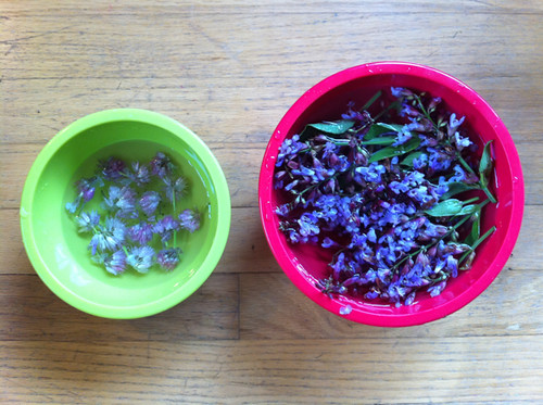 rinsing the chive + sage blossoms