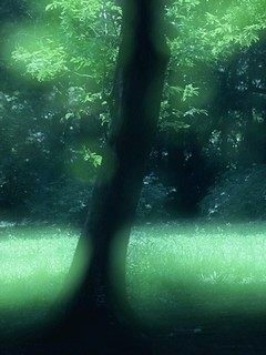 「四季・やすらぎの風景」DW012