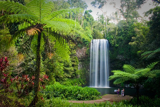 Daintree Forest The 10 most stunning (and less well known!) luxury vacation gems in Australia