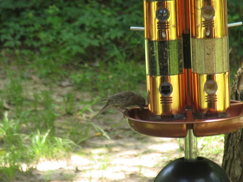 New CrabAppleLane Feeder - June 17, 2012