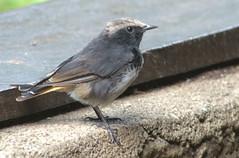 wren(0.0), nightingale(0.0), junco(0.0), wildlife(0.0), animal(1.0), sparrow(1.0), ortolan bunting(1.0), wing(1.0), fauna(1.0), finch(1.0), emberizidae(1.0), beak(1.0), house sparrow(1.0), bird(1.0),