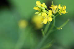 garden flowers 051