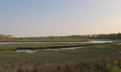 wetland, estuary, prairie, horizon, polder, grass, river, plain, nature, natural environment, morning, landscape, salt marsh, rural area, waterway, bog,