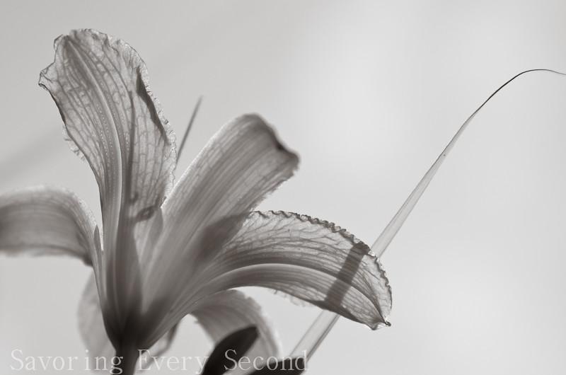 Random Beauty-009.jpg