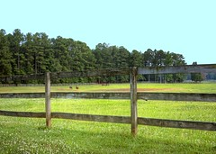 agriculture, land lot, farm, field, fence, soil, ranch, grass, split rail fence, property, meadow, landscape, lawn, pasture, rural area,