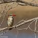 Zambian birds