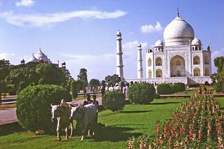 Taj Mahal gardeners (1)