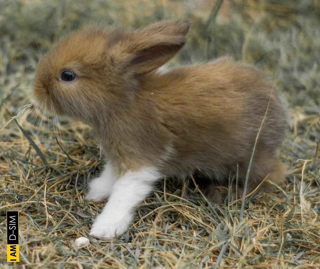 Baby Rabbit (3)