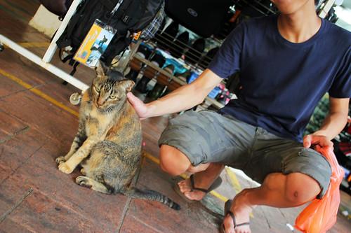 Bag Cat