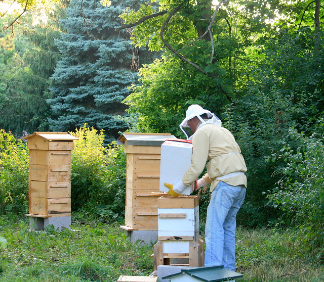 Transfer from Box to hive