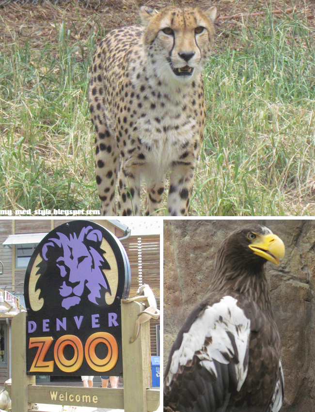 Denver Zoo Collage1