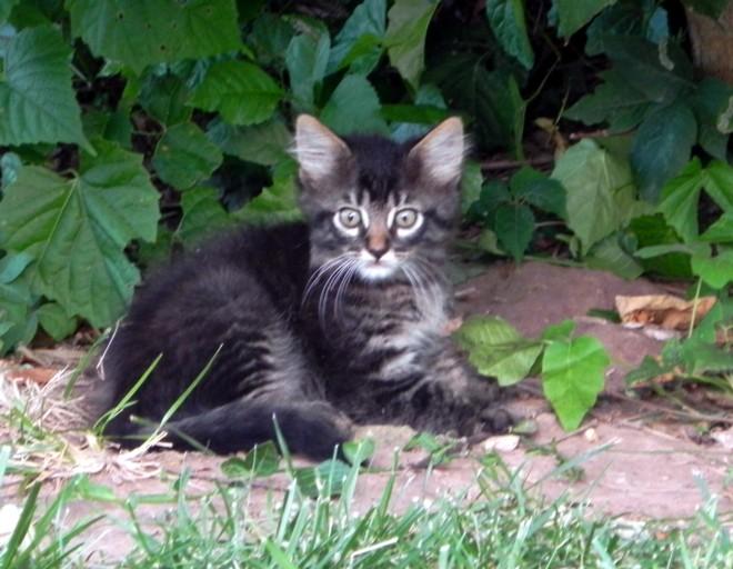 07-05-2012_Wild kitten