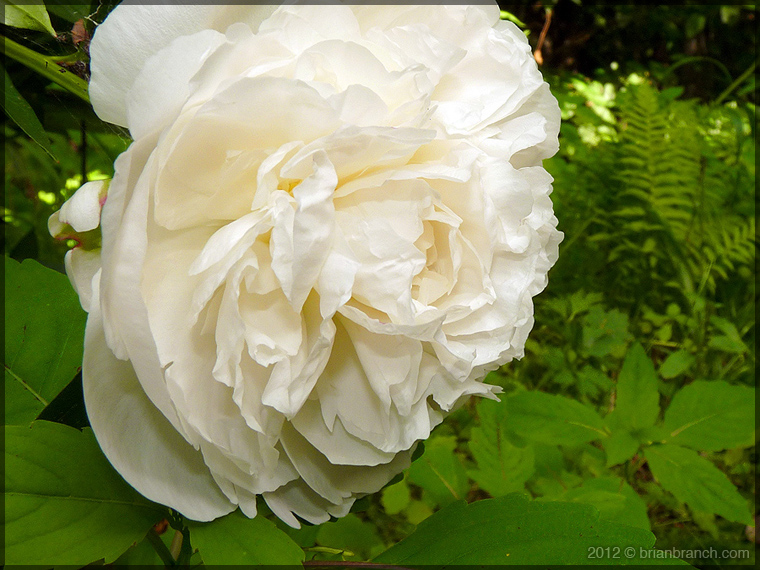 P1260450_flower_760
