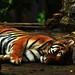 Sleeping by Bhudiarto