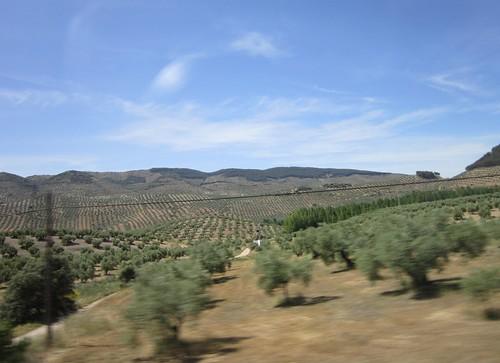 オリーブ畑~コルドバからグラナダへ行く途中 by Poran111