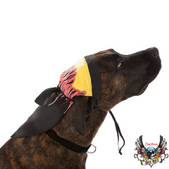 bret michaels dog flame bandana