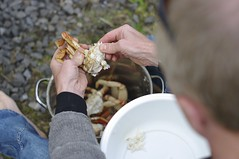 Shucking crab