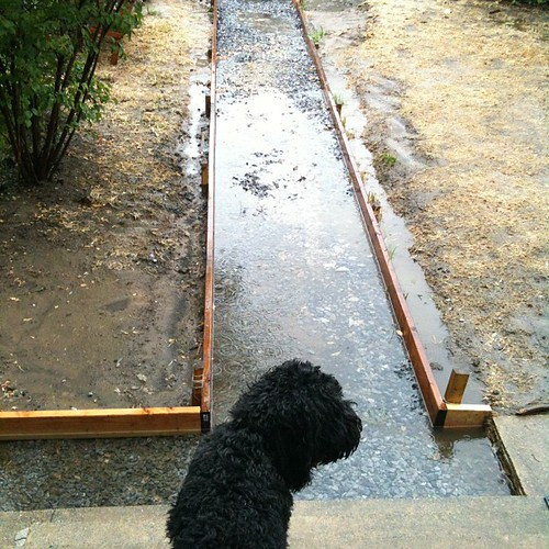 Back yard is a pond. That's @TerryThePup
