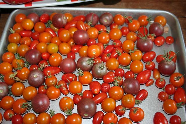 Tomatoes 2012 - Pan o' Cherries
