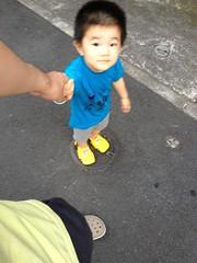 マンホールの蓋に乗る夕方散歩とらちゃん (2012/7/18)