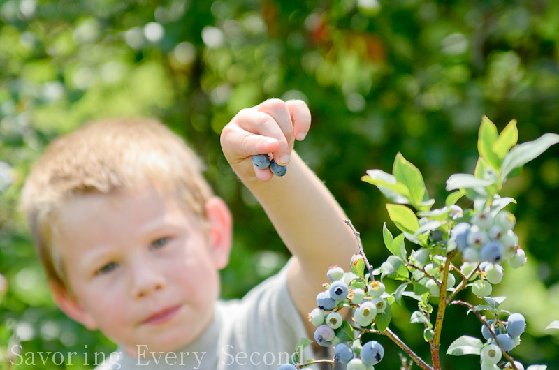 Blueberry Picking-007.jpg