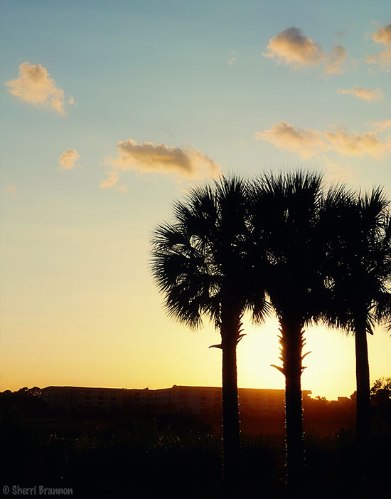 hhi-palms-sunset