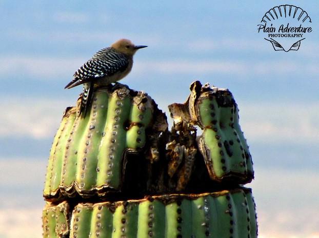 7666371588 e8ec780465 z  Arizona Sonora Desert Museum