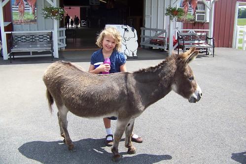 Q6 and donkey