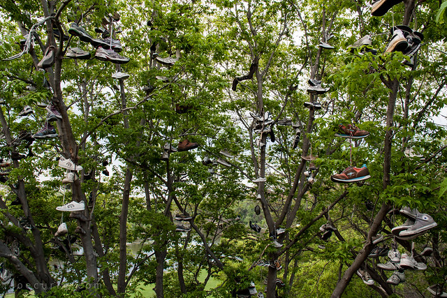 Shoe Tree, University of Minnesota
