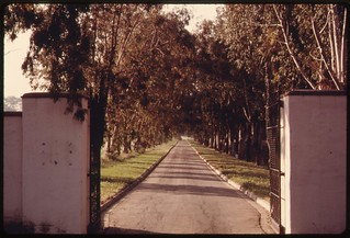 Trees line a private driveway off Mulholland Drive in the Santa Monica Mountains near Malibu, California, which is located on the northwestern edge of Los Angeles, May 1975