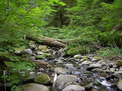 A recent study by the USDA Forest Service, Oregon State University, and the U.S. Geological Survey identified trends in stream temperatures at sites like Mack Creek near the H.J. Andrews Experimental Forest in Oregon.