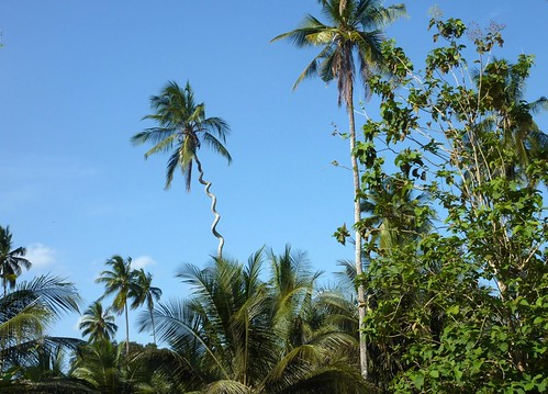 Kodak Tree Zanzibar