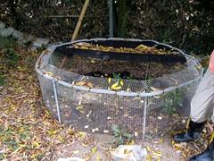 設在雲林的湖山水庫食蛇龜臨時復育區內的圍籠。(攝影:陳帝溶)