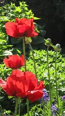 Blooms and plants / Blüten und Pflanzen