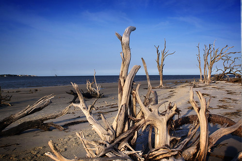 Driftwood Beach by erickpineda527