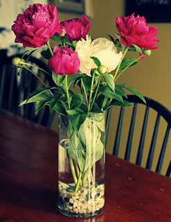 Peonies from my garden...