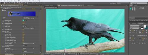 Raven Chroma 01