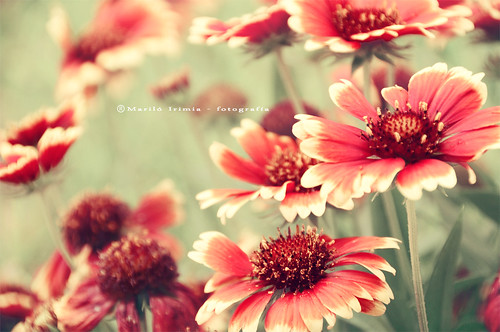 Happy flowers ...
