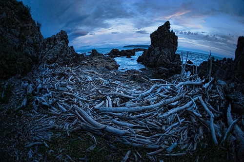wood west me sunrise island dawn bay bravo north nz wellington behind facing titahi drfit