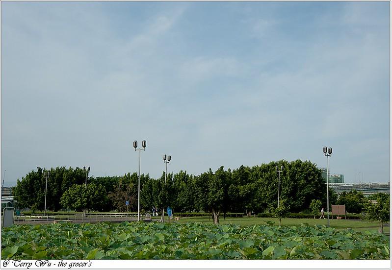 2012-06-24 三重疏洪荷花公園-10