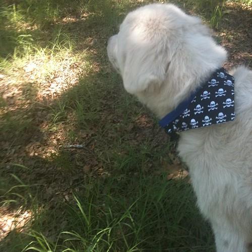 Shiloh's new bandana