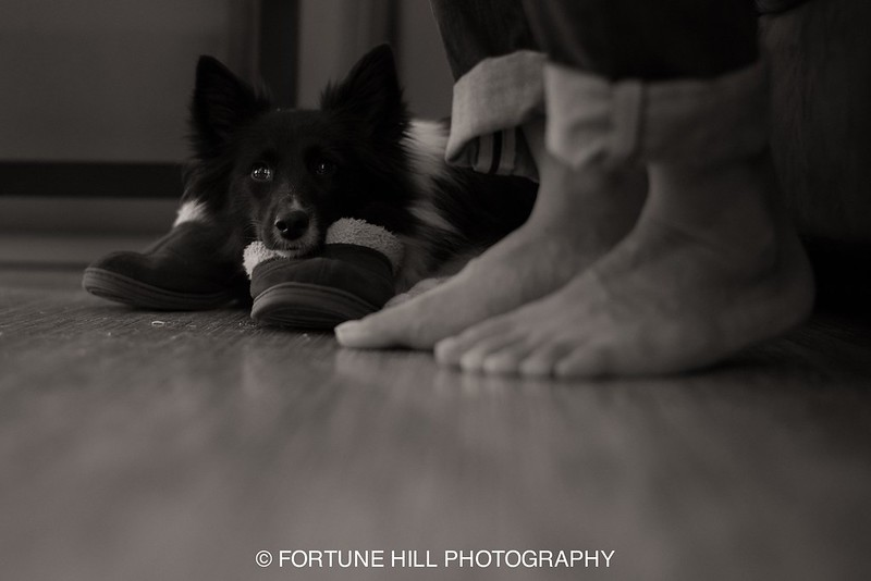 365 Project Day 45.jpg
